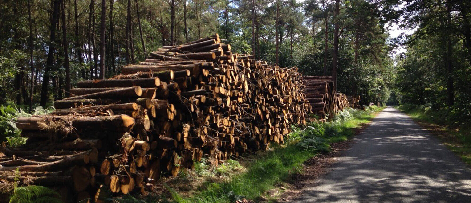 Activité de négoce de massifs forestiers